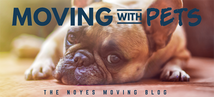 move pets noyes moving